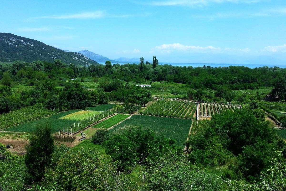 Montenegro Skadar Lake, vineyard tour
